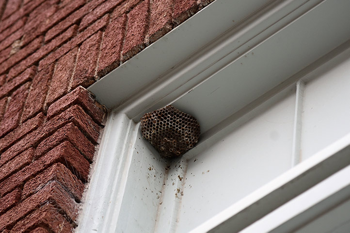 We provide a wasp nest removal service for domestic and commercial properties in Billericay.
